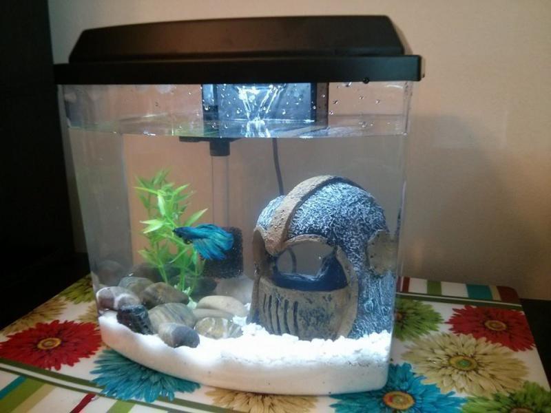 Aquarium Filter Betta Fish
