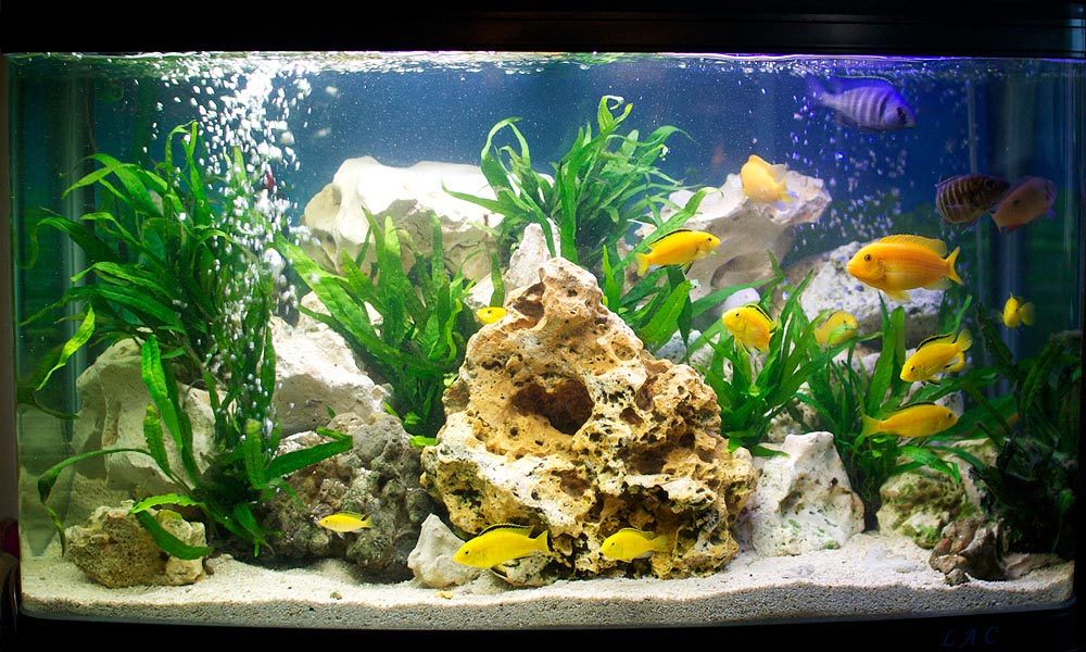 Aquarium Fish Cool Water