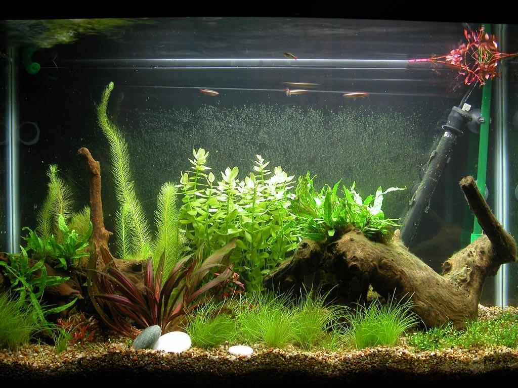 Aquarium Fish Tank Decorations