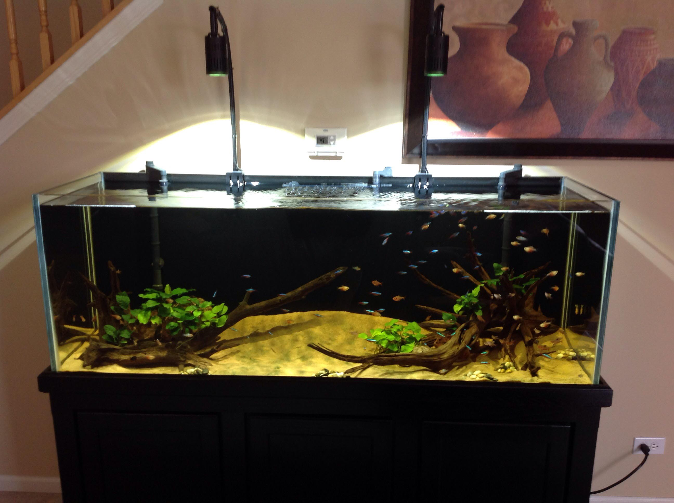 Aquarium Kits 100 Gallon