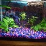 Aquarium Light Betta Fish