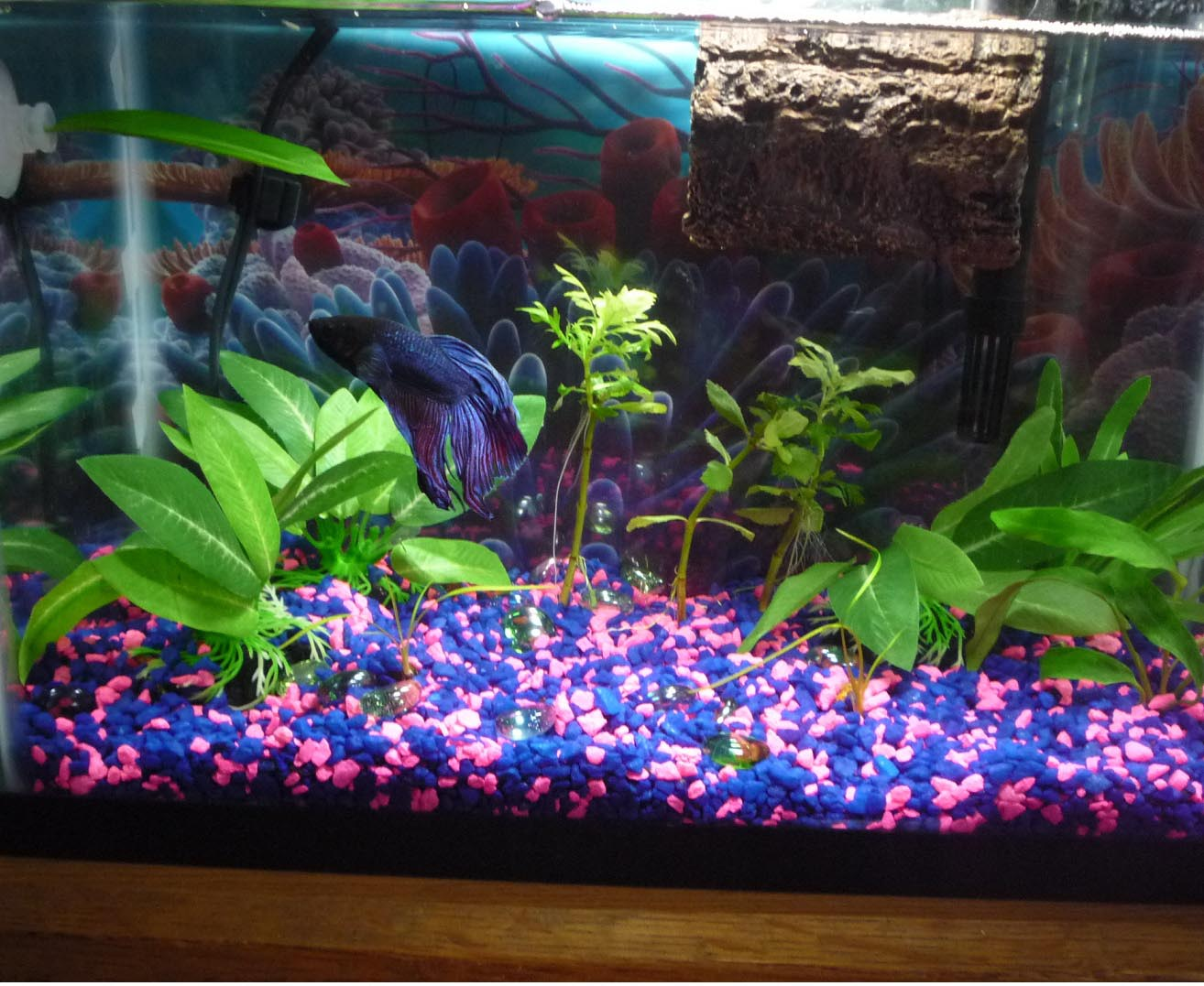 Aquarium fish aquarium design ideas for Betta fish tank light
