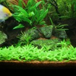 Aquarium Lighting Live Plants