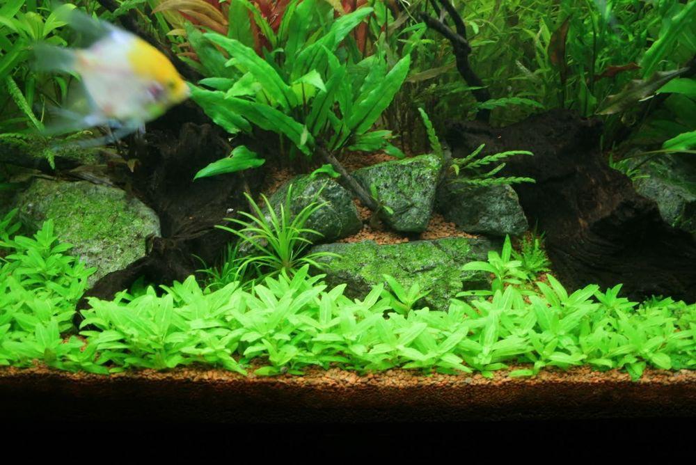 Aquarium Lighting Live Plants