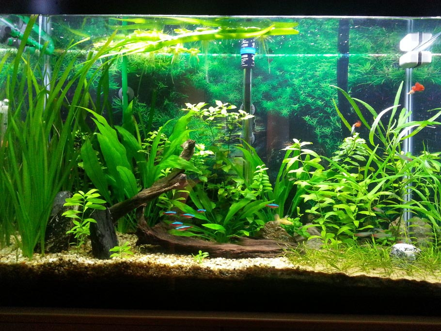Aquarium Live Plant Care