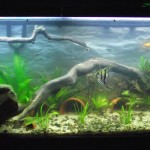 Aquarium Live Plant Substrate