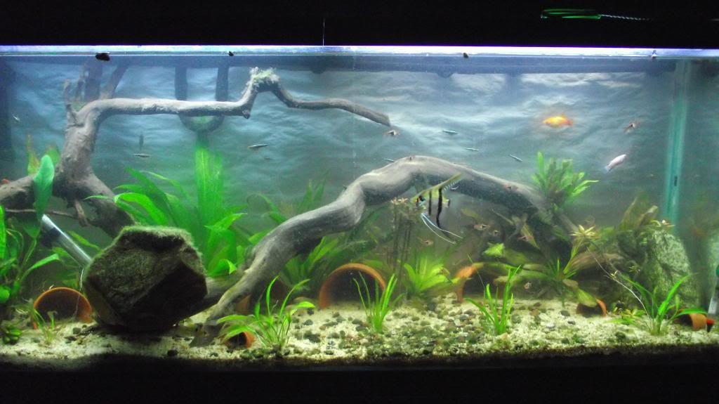 Aquarium Live Plant Substrate