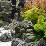 Aquarium Live Plants Care