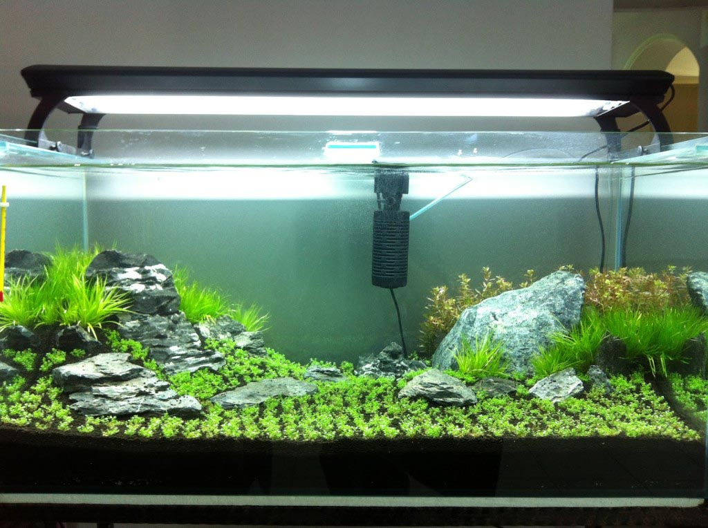 Aquarium Live Plants for Beginners