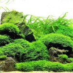 Aquarium Live Plants List