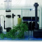 Aquarium Marine Fish Tank with Sump Filtration