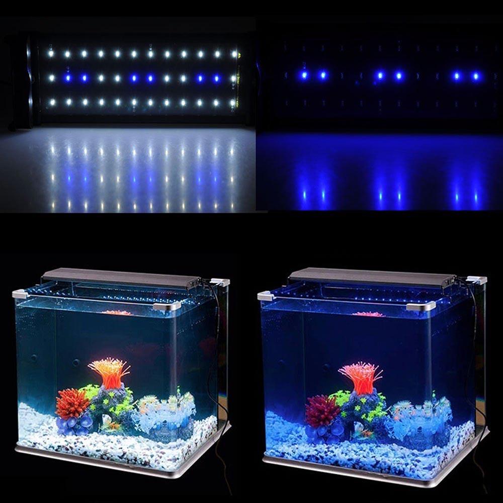 Aquarium Marine Fish Tank