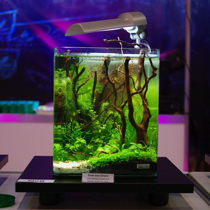 Aquarium Nano Cube Marine Fish Tank | Aquarium Design Ideas