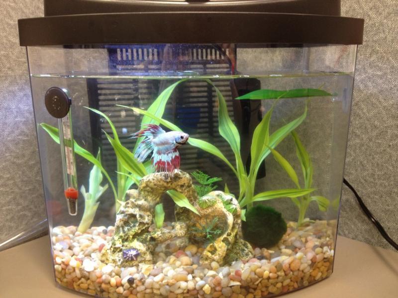 Betta aquarium ideas 1000 aquarium ideas for Fish tank with plants on top
