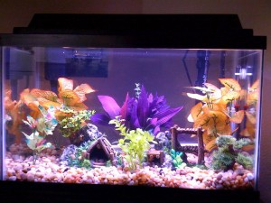 Aquarium Plants for Betta Fish