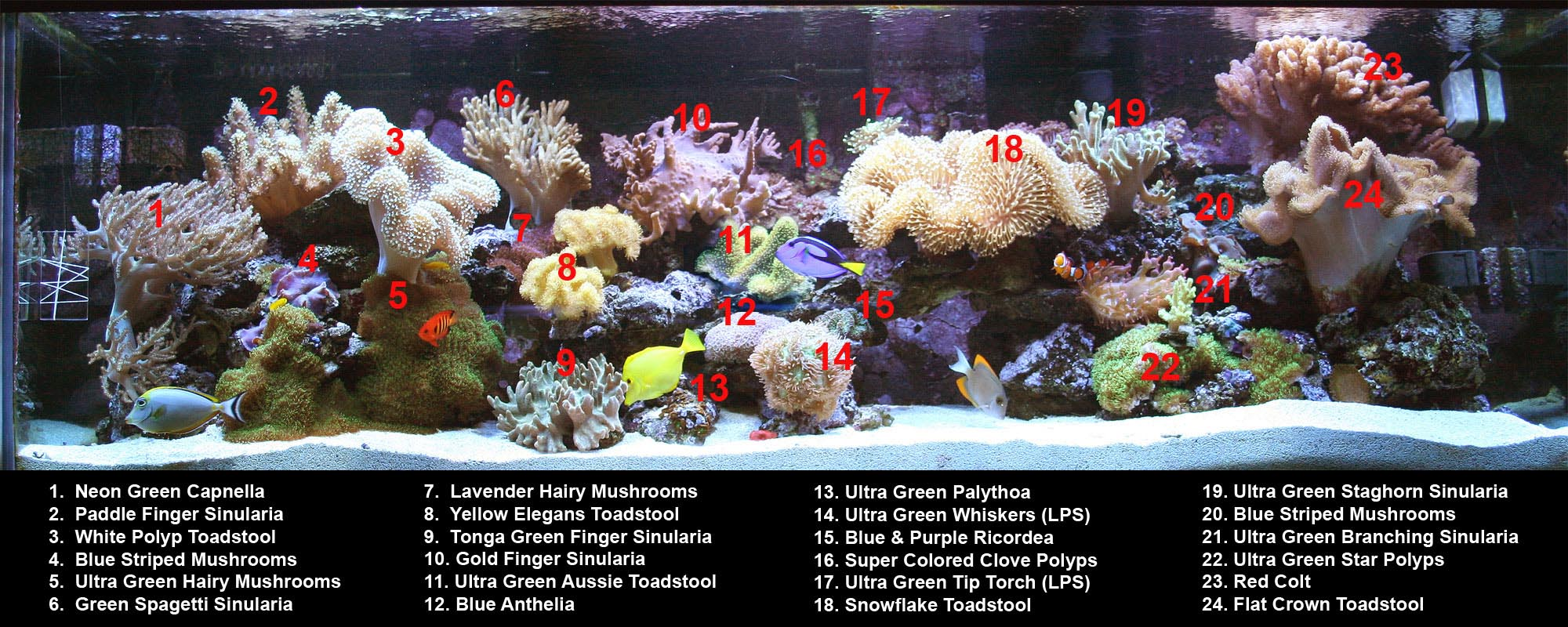 Aquarium Reef Coral Guide
