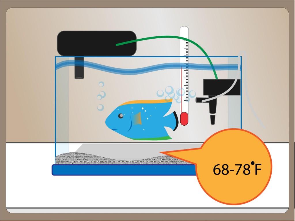 Aquarium Water Temperature for Tropical Fish
