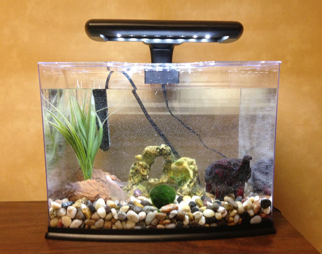 Aquariums for Betta Fish