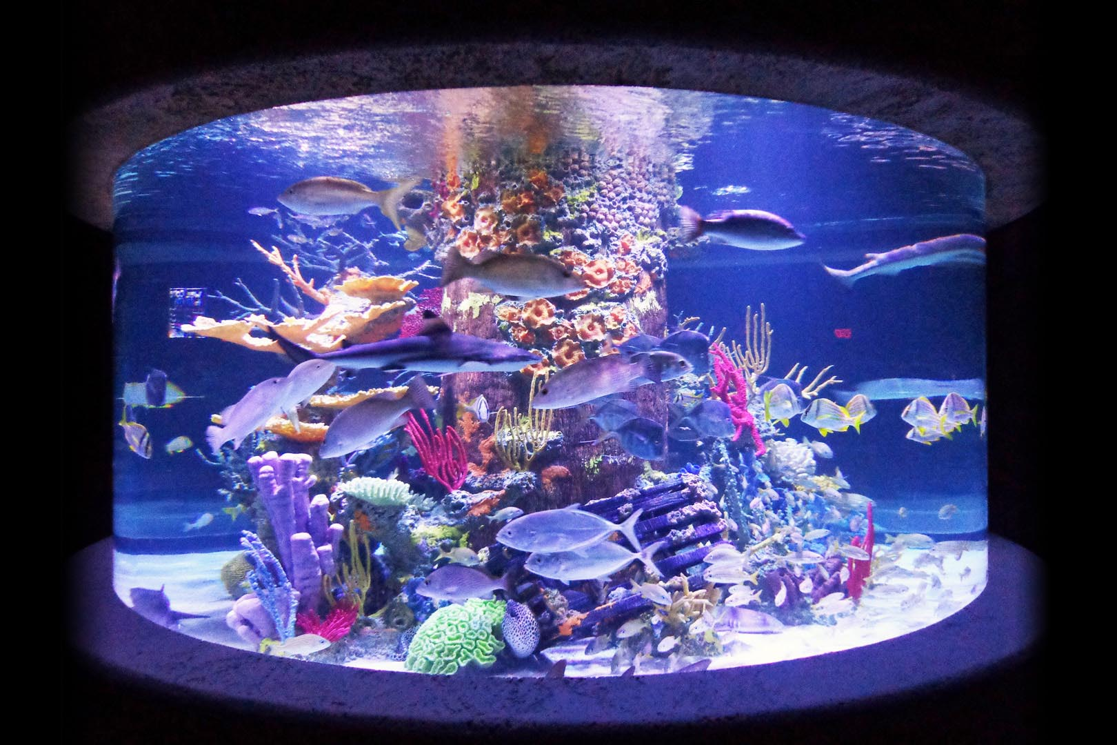 Artificial Coral Reef Aquarium Decoration Inserts