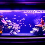 Artificial Coral Reefs for Aquariums