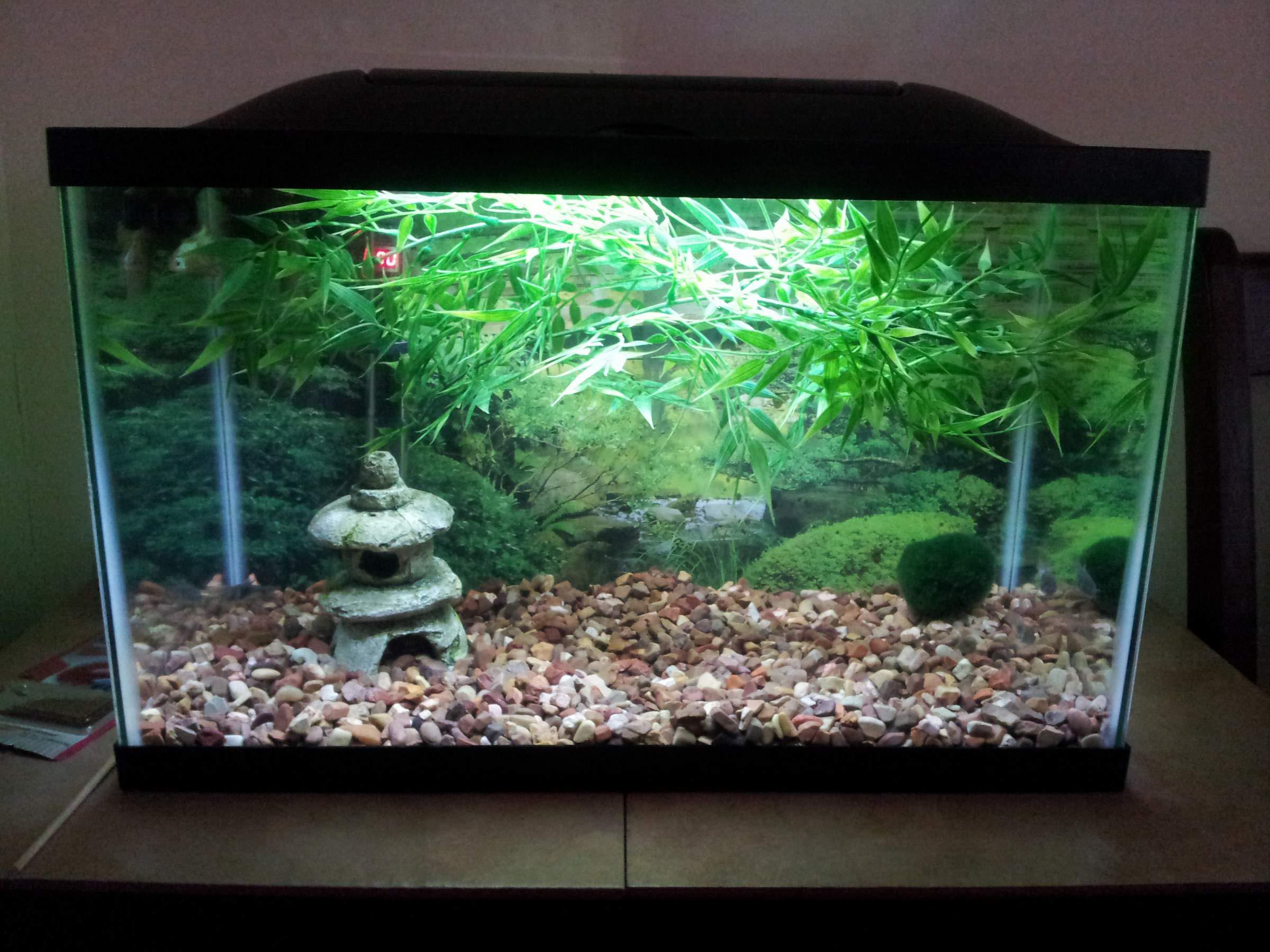 Asian fish aquarium decor aquarium design ideas for Aquarium decoration idea