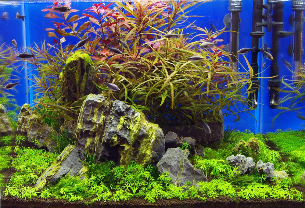 Beautiful Tropical Fish for Aquariums