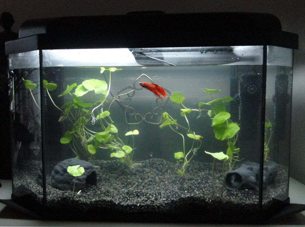 Best aquarium decorations for betta fish aquarium design for How to decorate fish tank