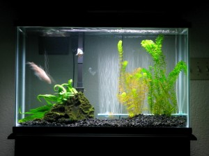 Best Aquarium for Betta Fish