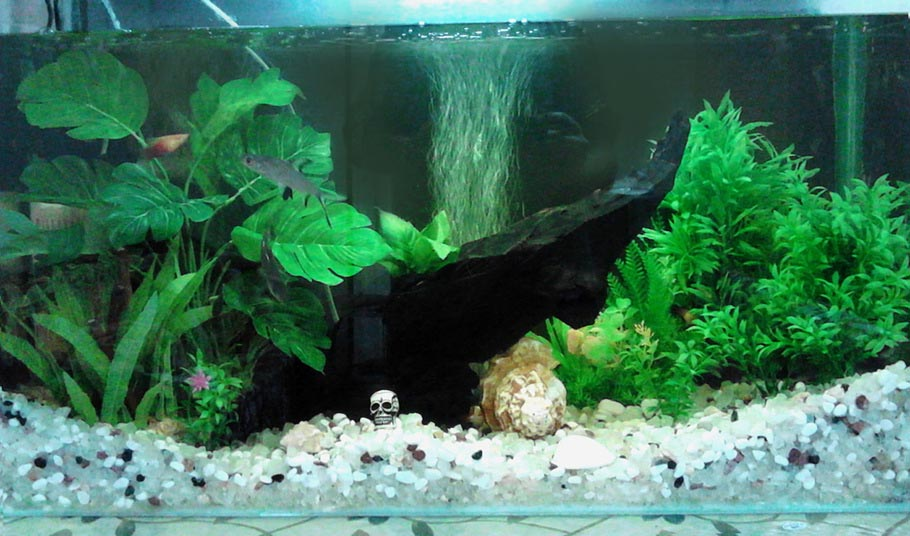 Best Aquarium Gravel for Live Plants