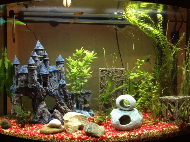 Best aquarium setup for betta fish aquarium design ideas for Betta fish tank ideas