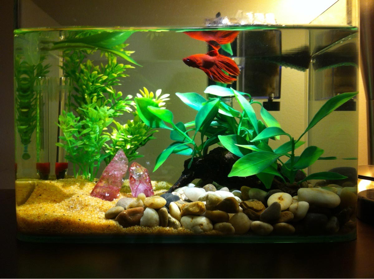 Best Aquariums for Betta Fish