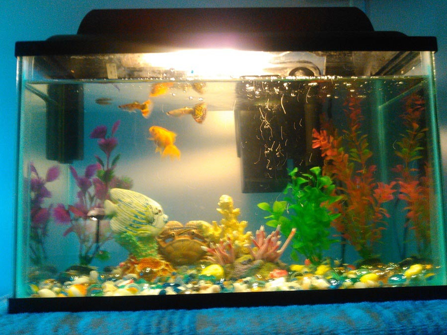 Setup for a small aquarium fish aquarium design ideas for Good fish for small tanks
