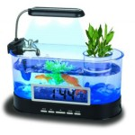 Best Fish Small Desktop Aquarium
