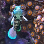 Best Marine Aquarium Fish