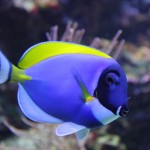 Best Saltwater Aquarium Fish