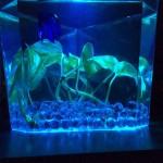 Best Size Aquarium for Betta Fish