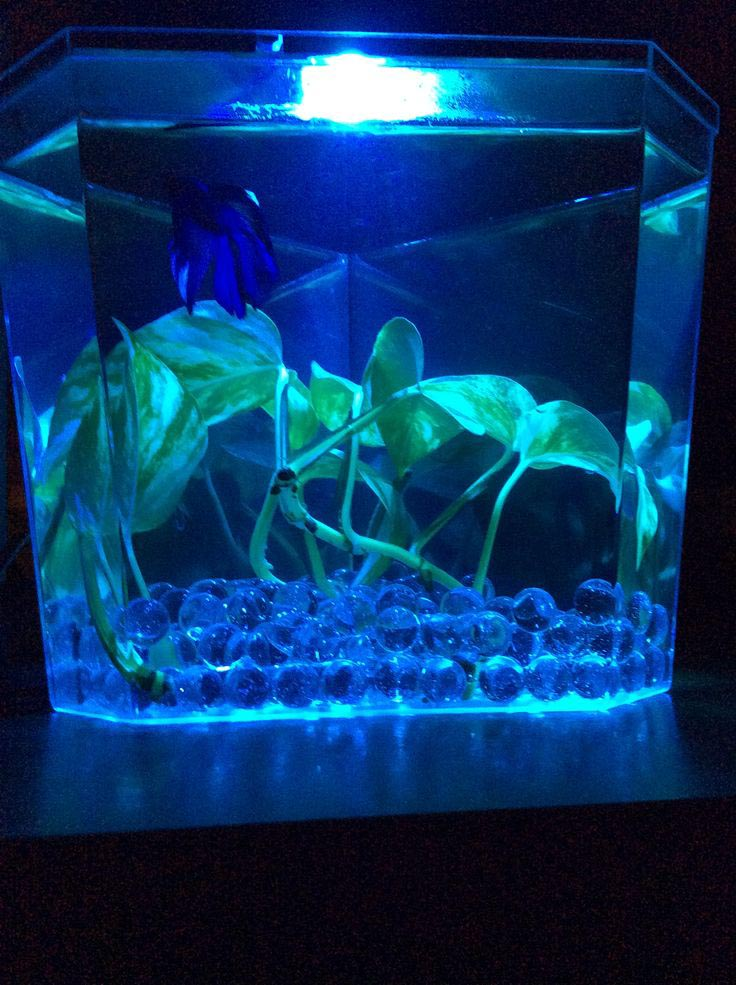 Best size aquarium for betta fish aquarium design ideas for Best aquarium fish
