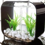 Best Small Aquarium Fish