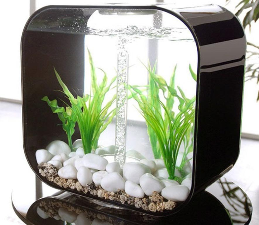 Best small aquarium fish aquarium design ideas for Good fish for small tanks