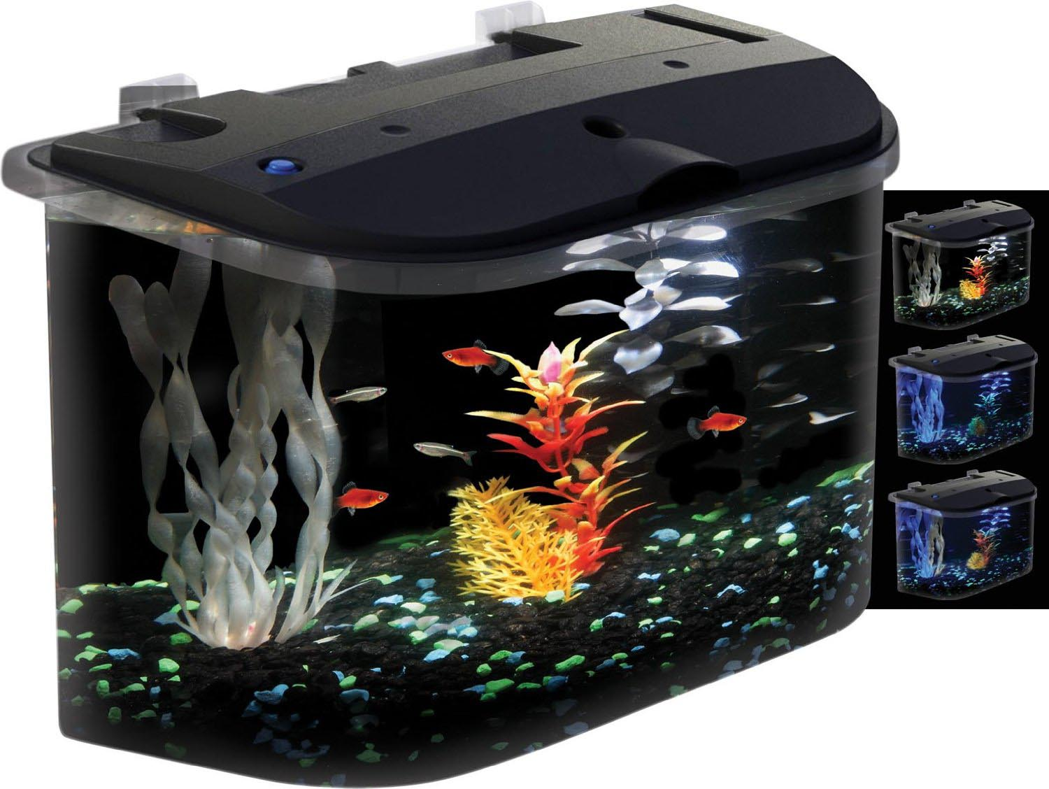 Best Small Fish Aquarium