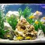 Best Tropical Fish Aquarium