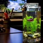 Betta Aquarium Fish Tanks