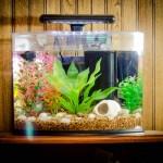 Betta Fish Aquarium Ideas