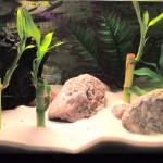 Betta Fish Aquarium Information