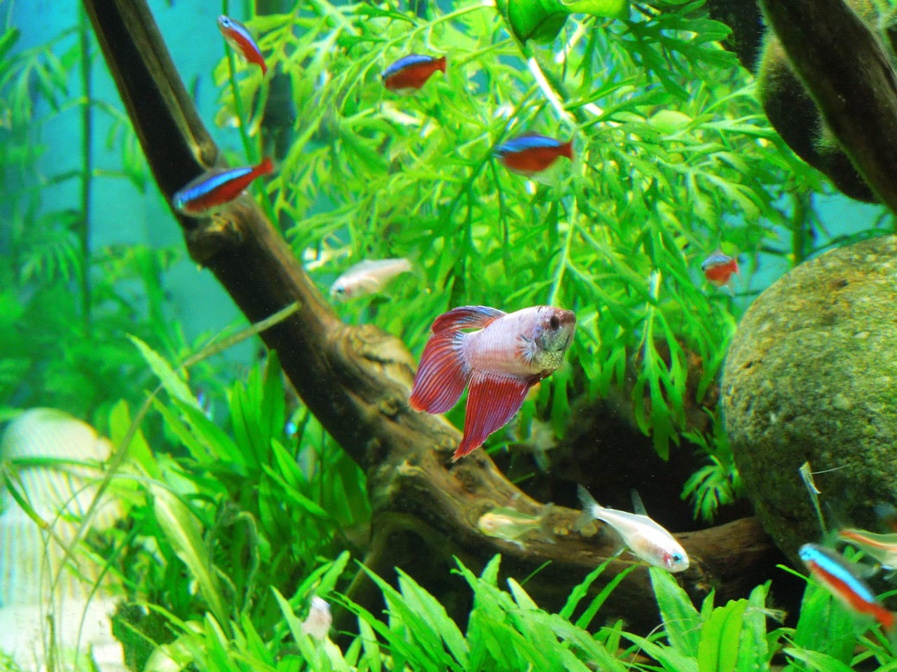 best aquarium fish live - photo #15