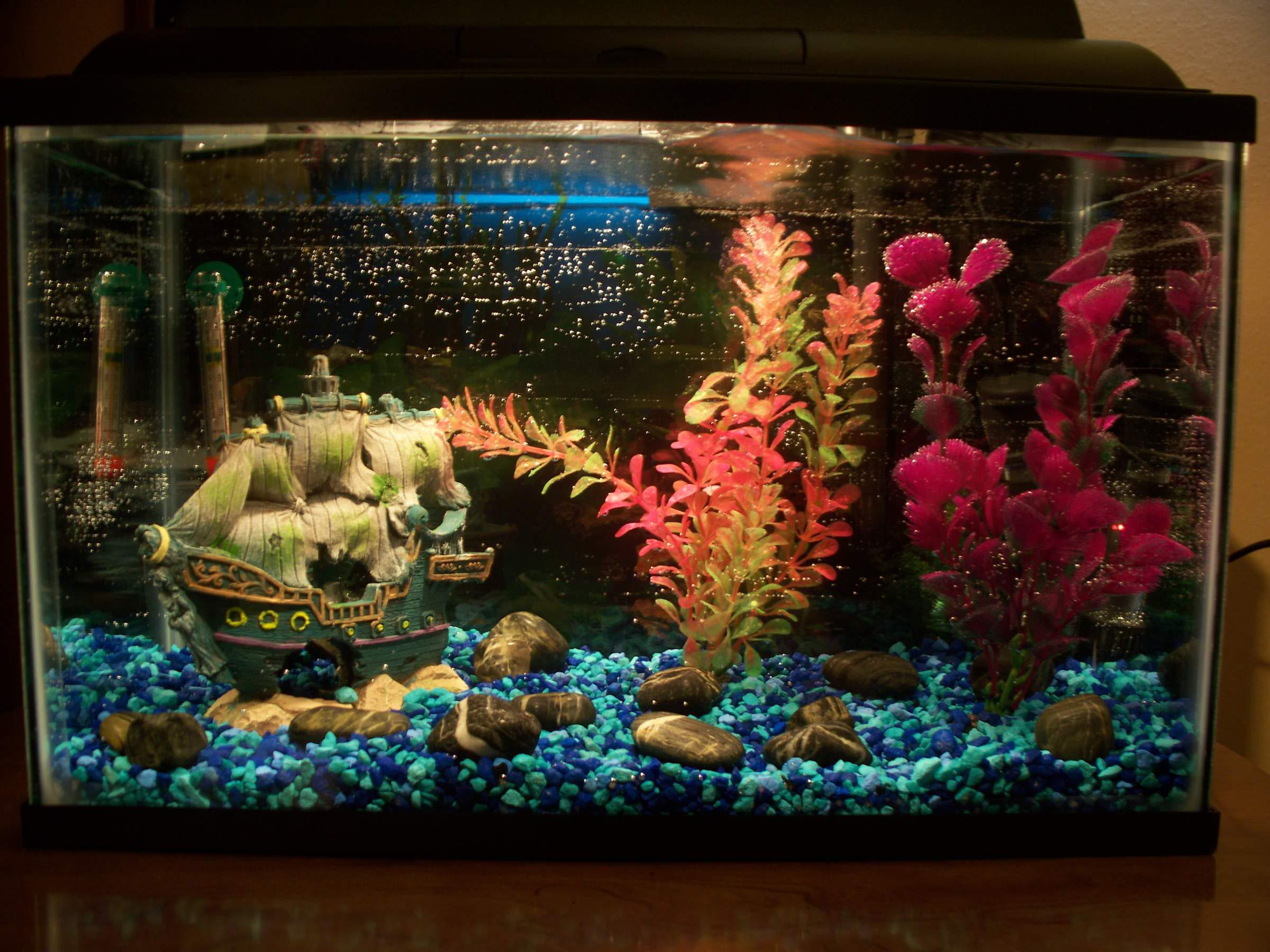 How to set up a betta fish aquarium aquarium design ideas for Freshwater fish tank setup