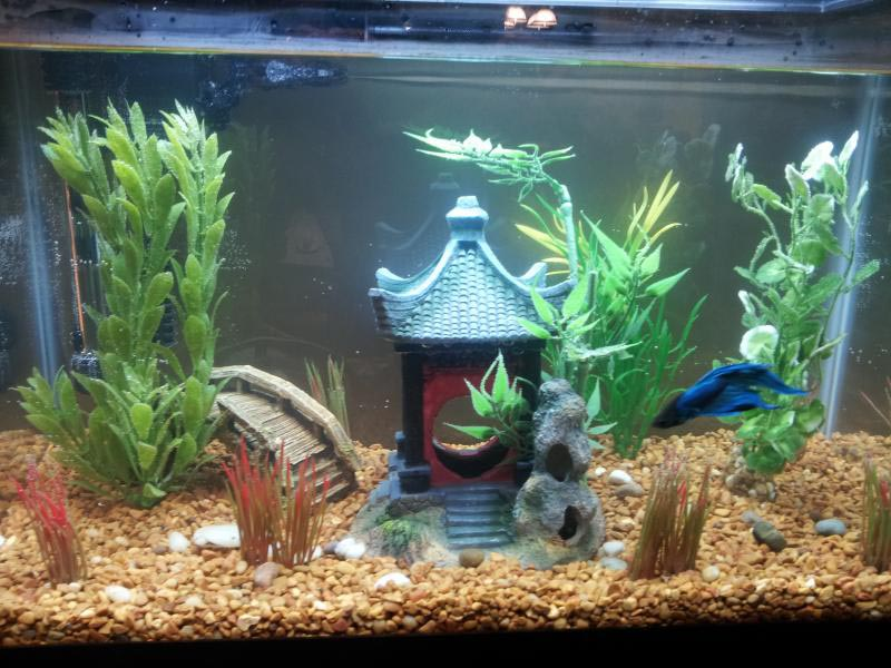 Betta fish aquarium toys aquarium design ideas for Betta fish tank ideas