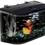 Betta Fish Aquarium with Filter