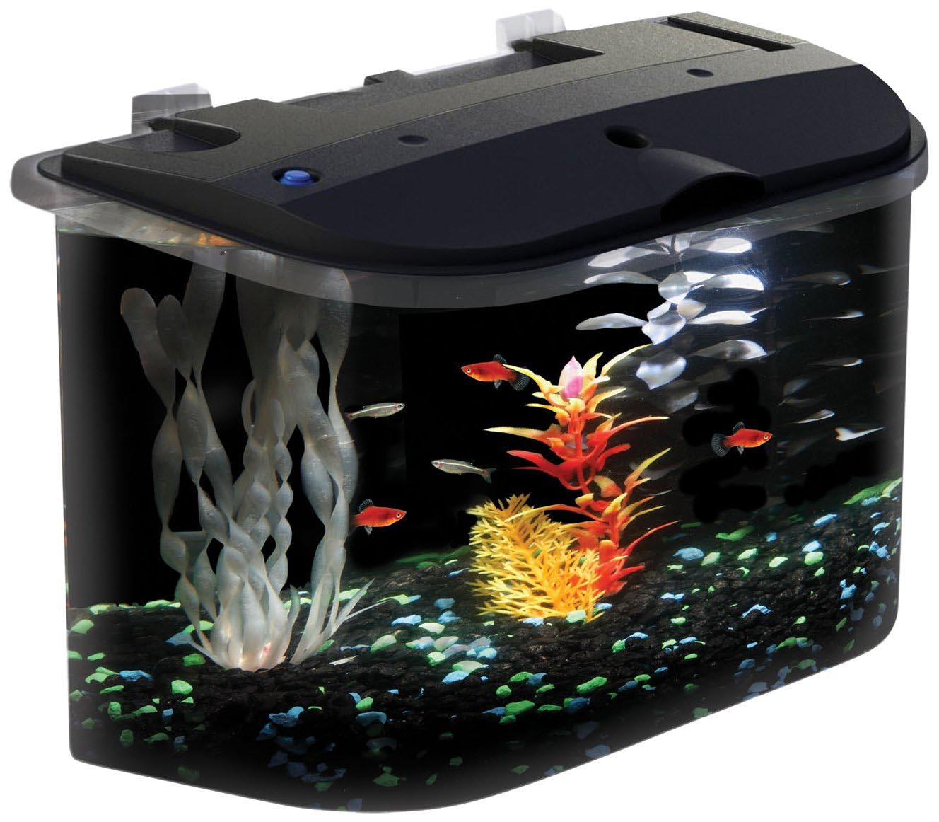 How to set up a betta fish aquarium aquarium design ideas for Betta fish tank with filter