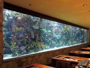 Big Tropical Fish for Aquarium